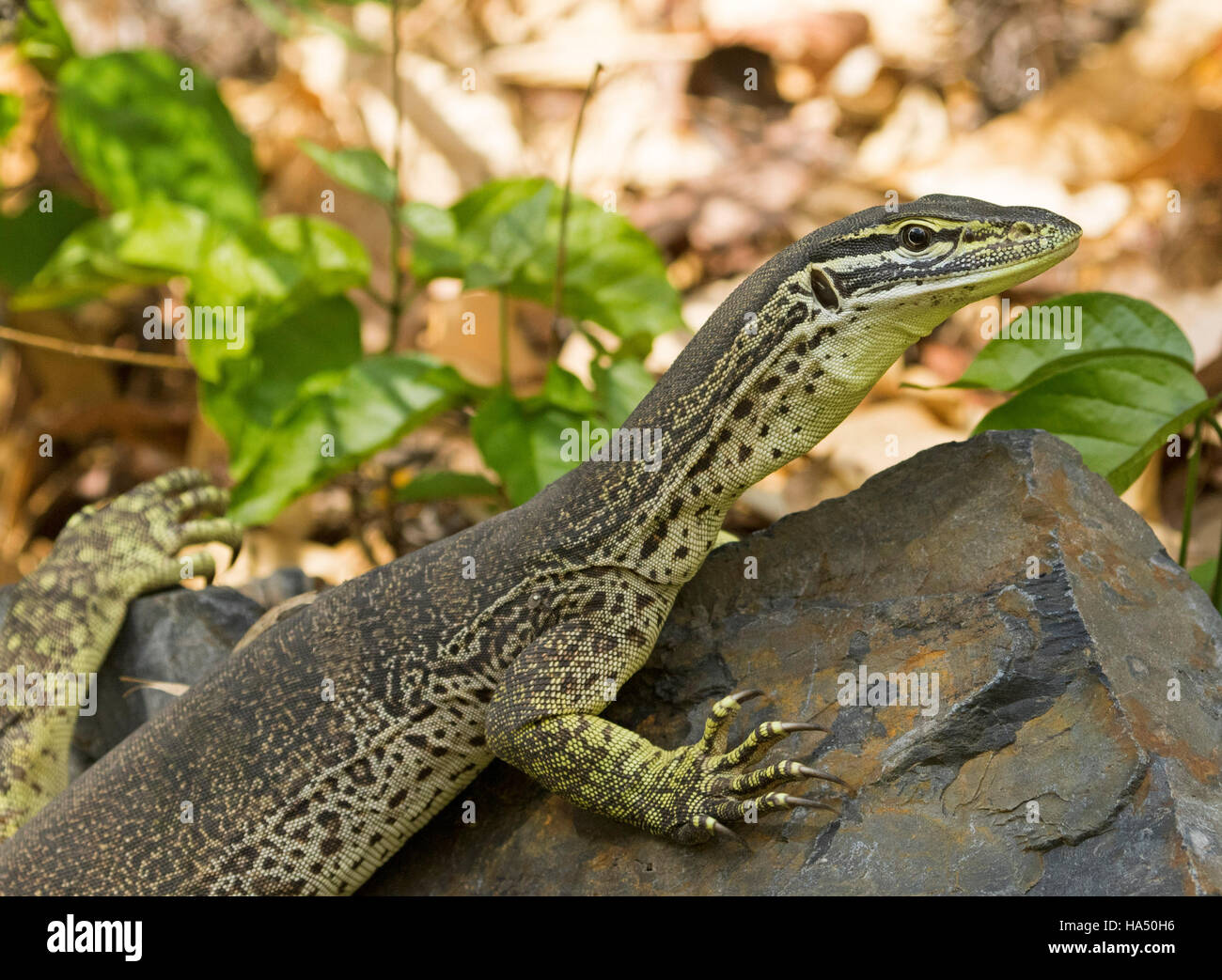 Scary Claws Stock Photos & Scary Claws Stock Images - Alamy