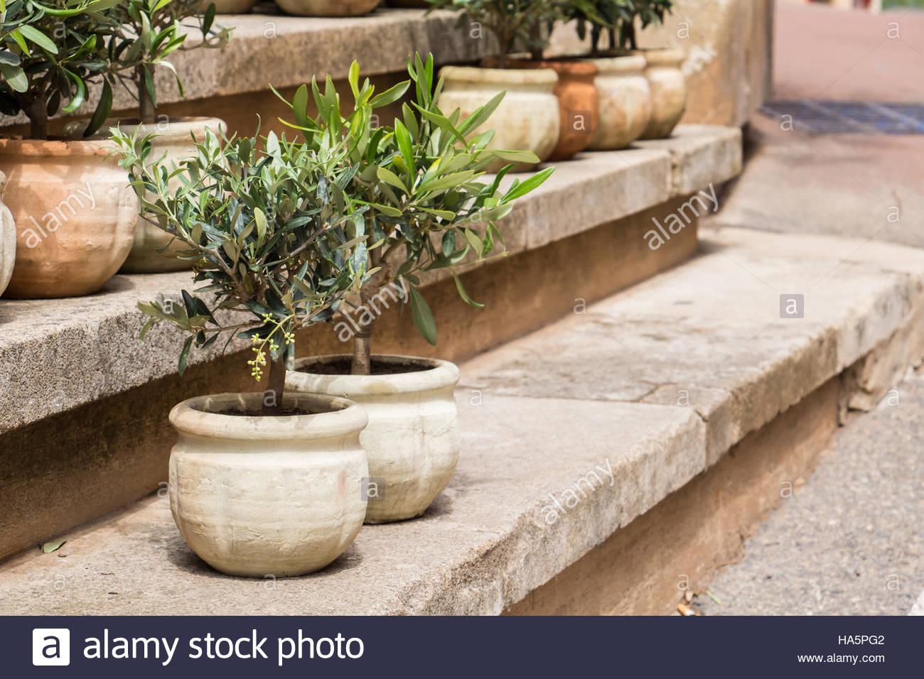 Garden Pots For Sale Stock Photos & Garden Pots For Sale Stock ...
