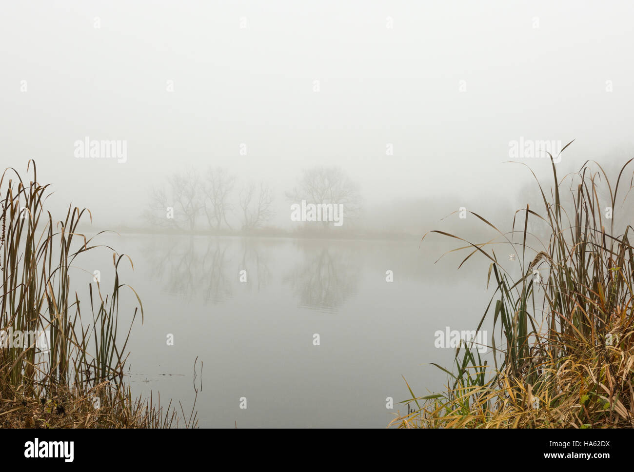 Photo very foggy morning on the forest pond in November. An interesting mysterious and mystical landscape. Horizontal - Stock Image
