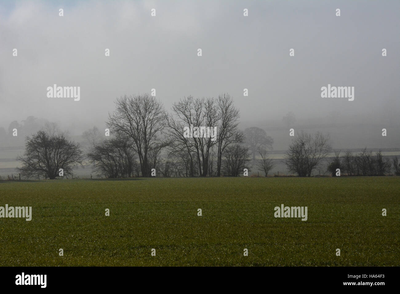 Fog over fields in Warwickshire hiding Meon Hill from view - Stock Image