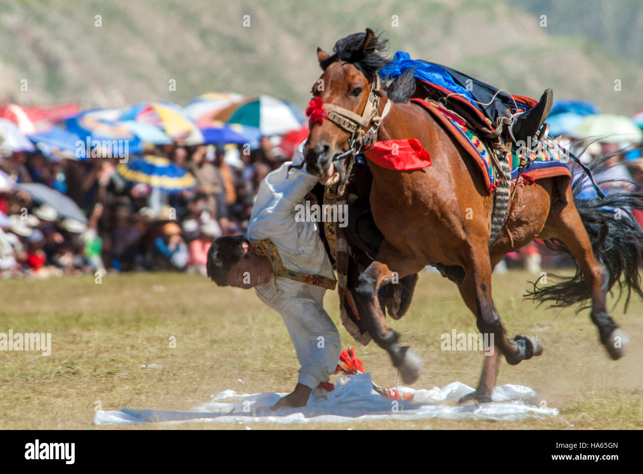 A Khampa horseman practices picking up silk scarves from the back of a galloping horse at the Yushu Horse Racing - Stock Image