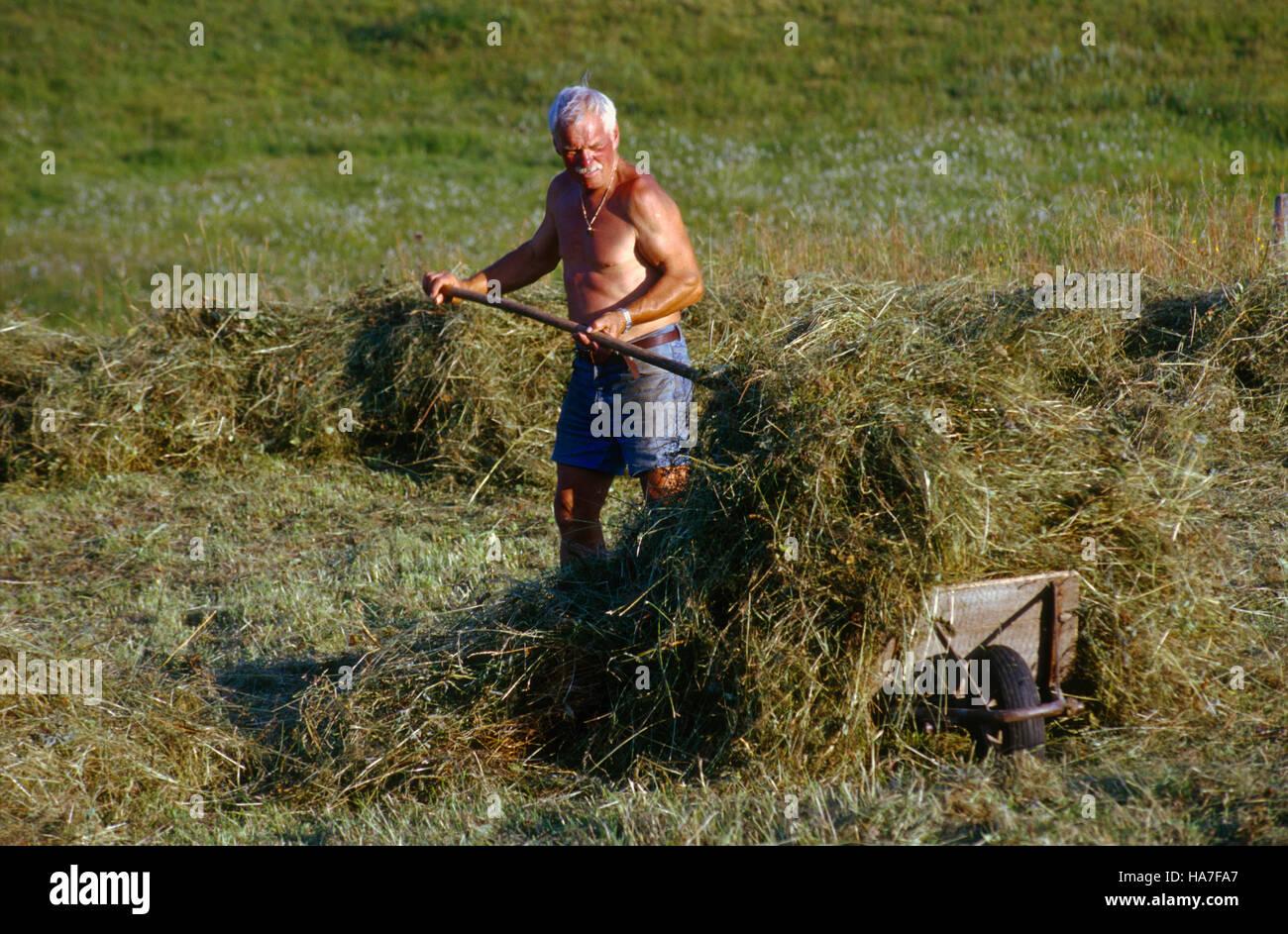 Herdsman harvesting hay on the shieling Ebenforst, Kalkalpen National Park, Upper Austria, Europe Stock Photo
