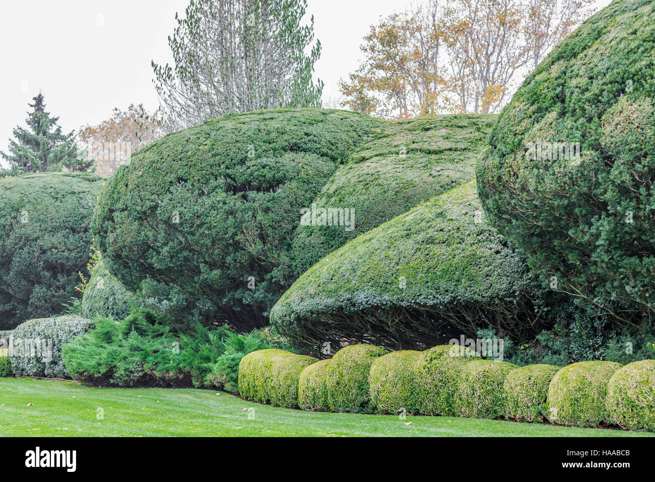 expertly cut and shaped hedges and bushes in a prized landscaped yard - Stock Image