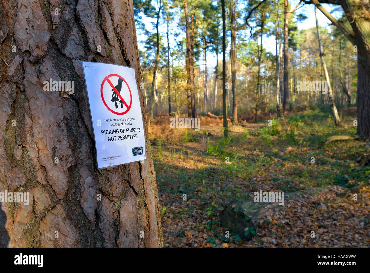Warning sign on tree stating not to pick fungi - Stock Image