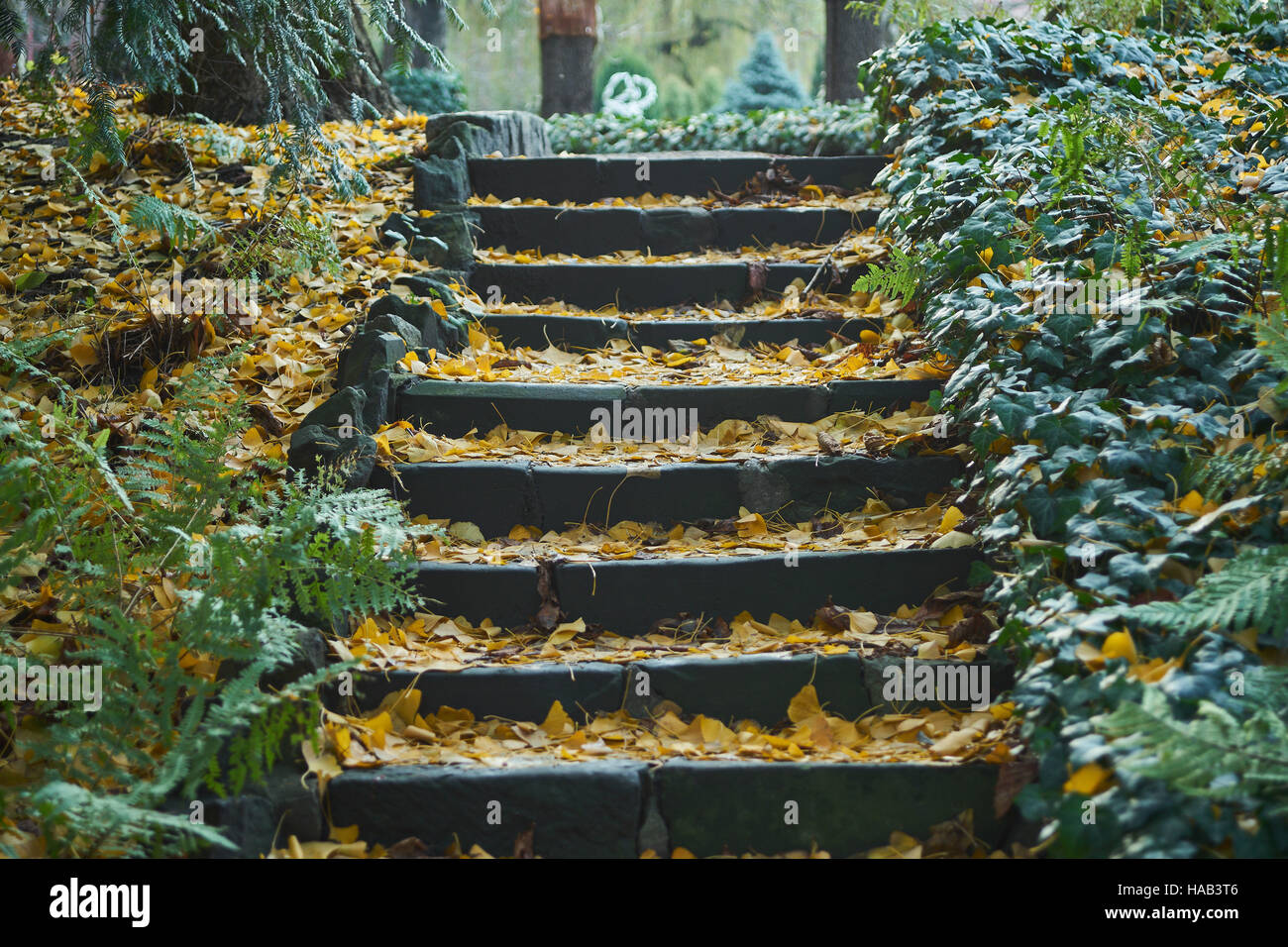 Stone staircase covered with fallen leaves lined by ivy - Stock Image