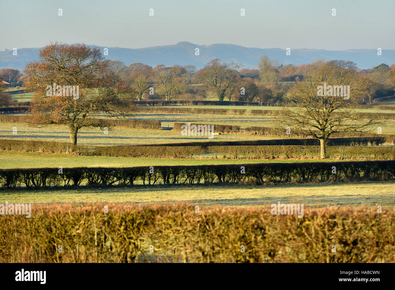 Sussex countryside in winter showing hedgerows and South Downs - Stock Image