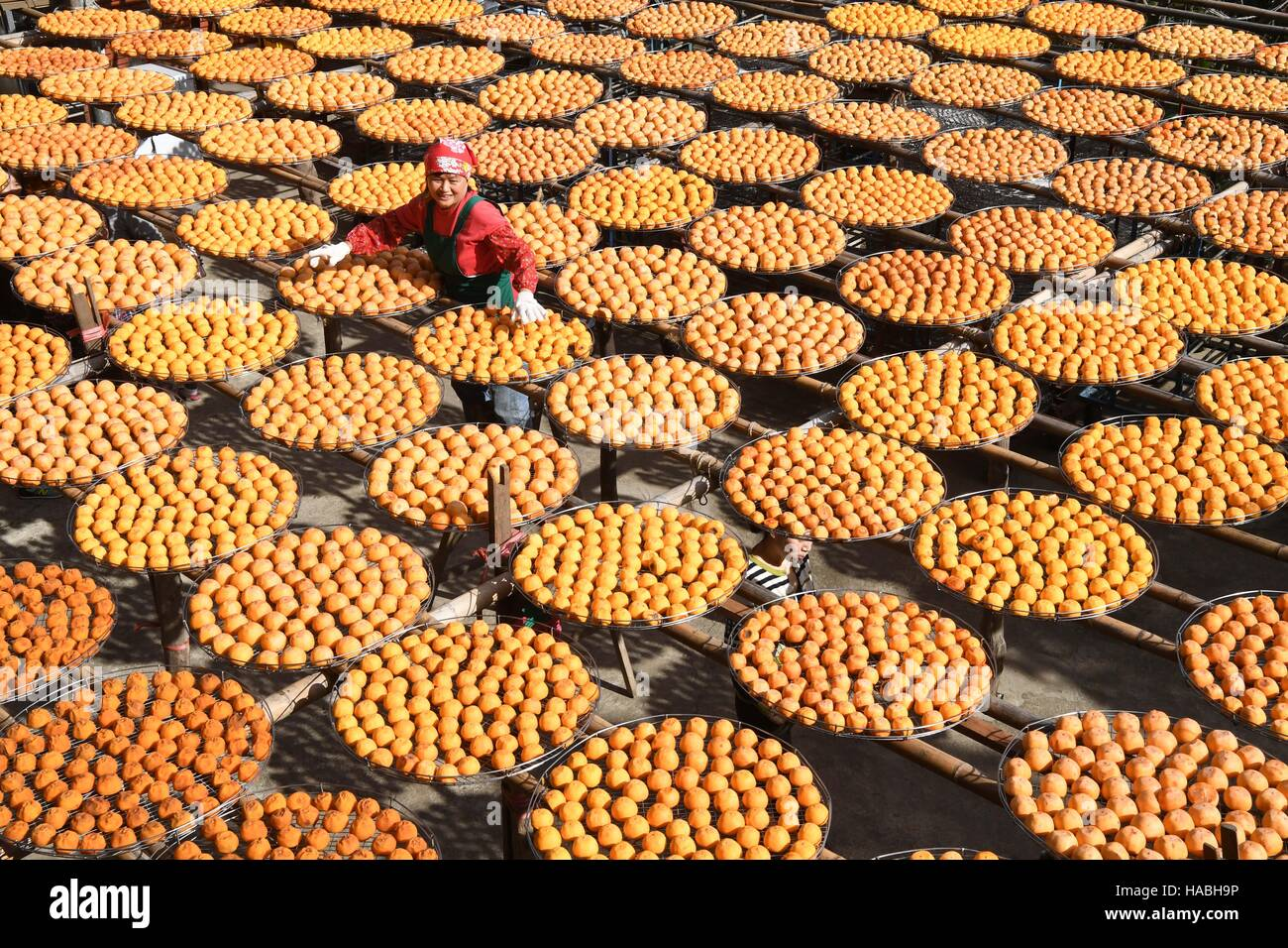 Hsinchu, China's Taiwan. 29th Nov, 2016. A farmer airs persimmons at Hsinchu County, southeast China's Taiwan, - Stock Image
