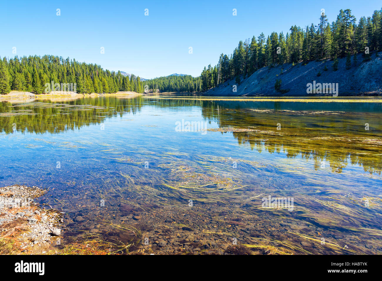 Yellowstone River landscape with beautiful forest reflection in Yellowstone National Park - Stock Image