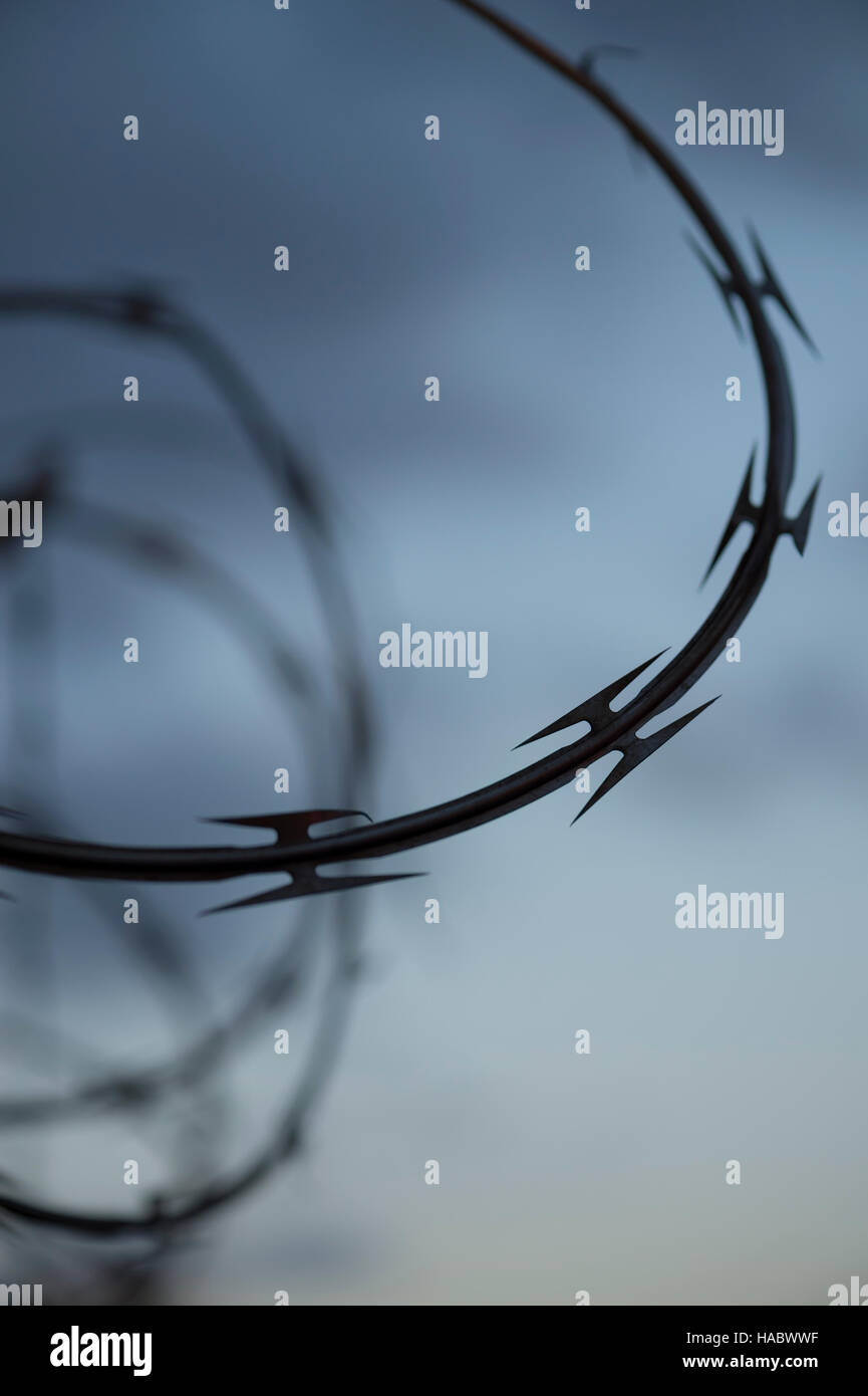 Barb razor wire black spirals on dusk sky - Stock Image