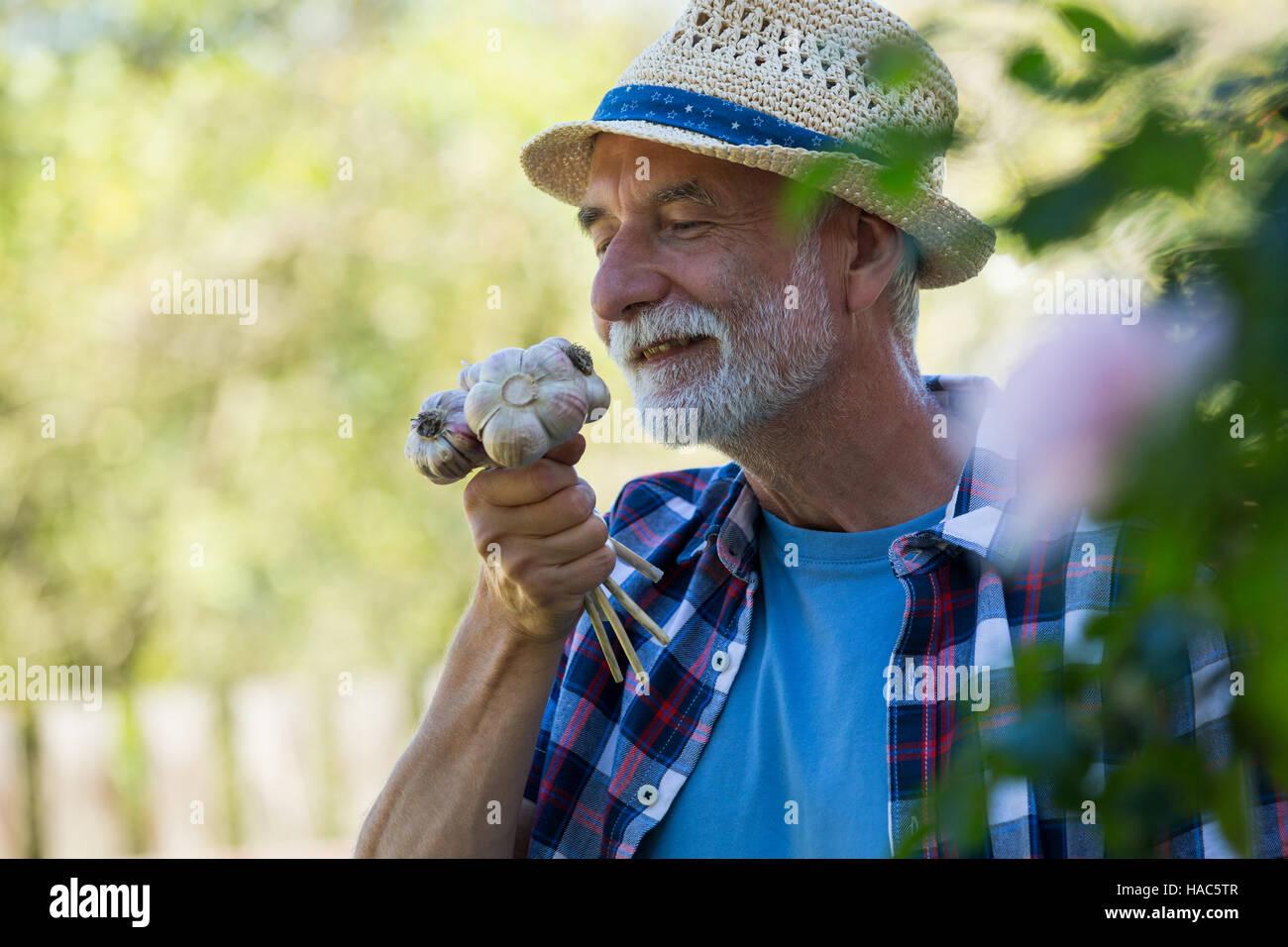 Senior man smelling freshly picked garlic bulb Stock Photo