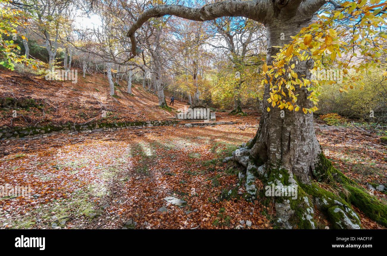 Tourist alone contemplating autumn - Stock Image