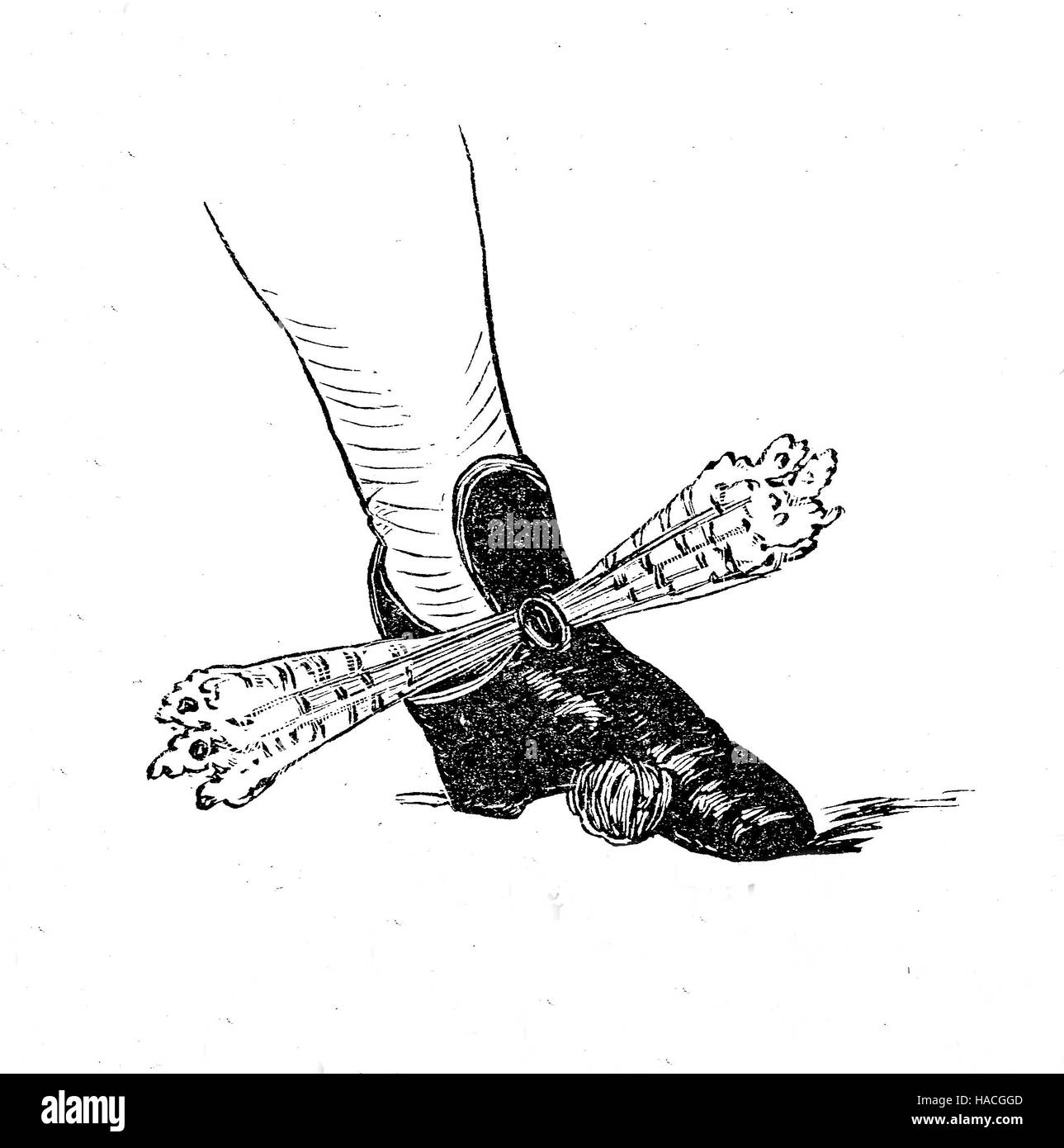Shoes, fashion of the past. Shoe from France, 1695, with a bow of laces, historic illustration, woodcut - Stock Image