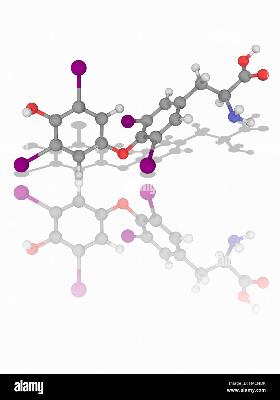 Levothyroxine Molecular Model Of The Drug Levothyroxine Stock