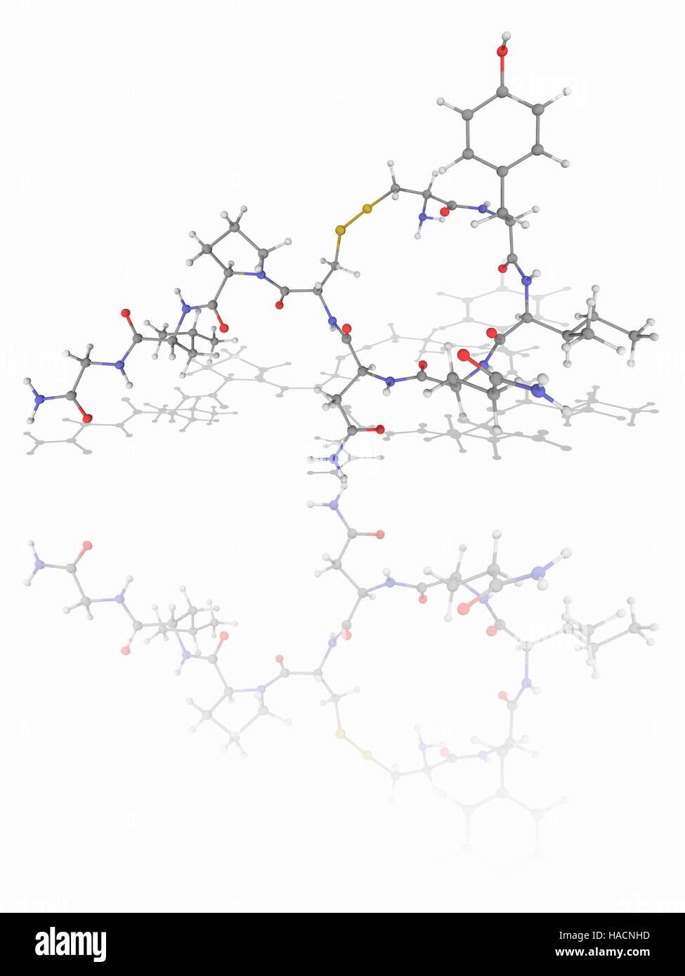 Oxytocin. Molecular model of the mammalian hormone oxytocin (C43.H66.N12.O12.S2), which acts as a neuromodulator - Stock Image