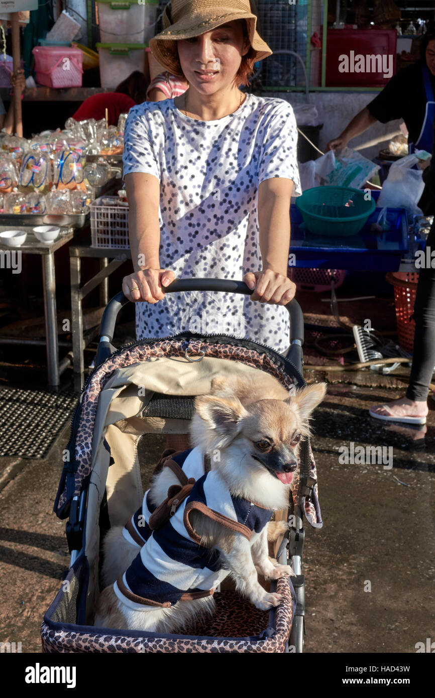 Woman transporting pampered pet dogs in a child pushchair. Thailand S. E. Asia - Stock Image