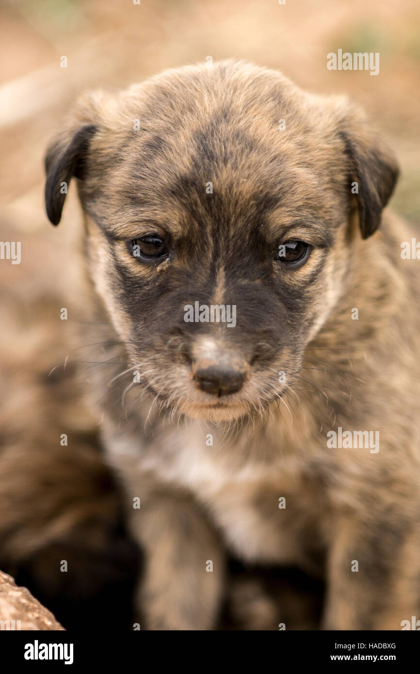 One unmanned dog puppies in the field playing and sleeping - Stock Image
