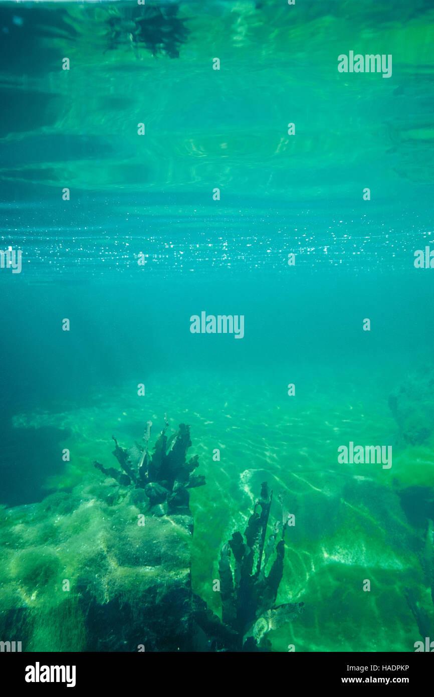 translucent blue green underwater scenery - Stock Image