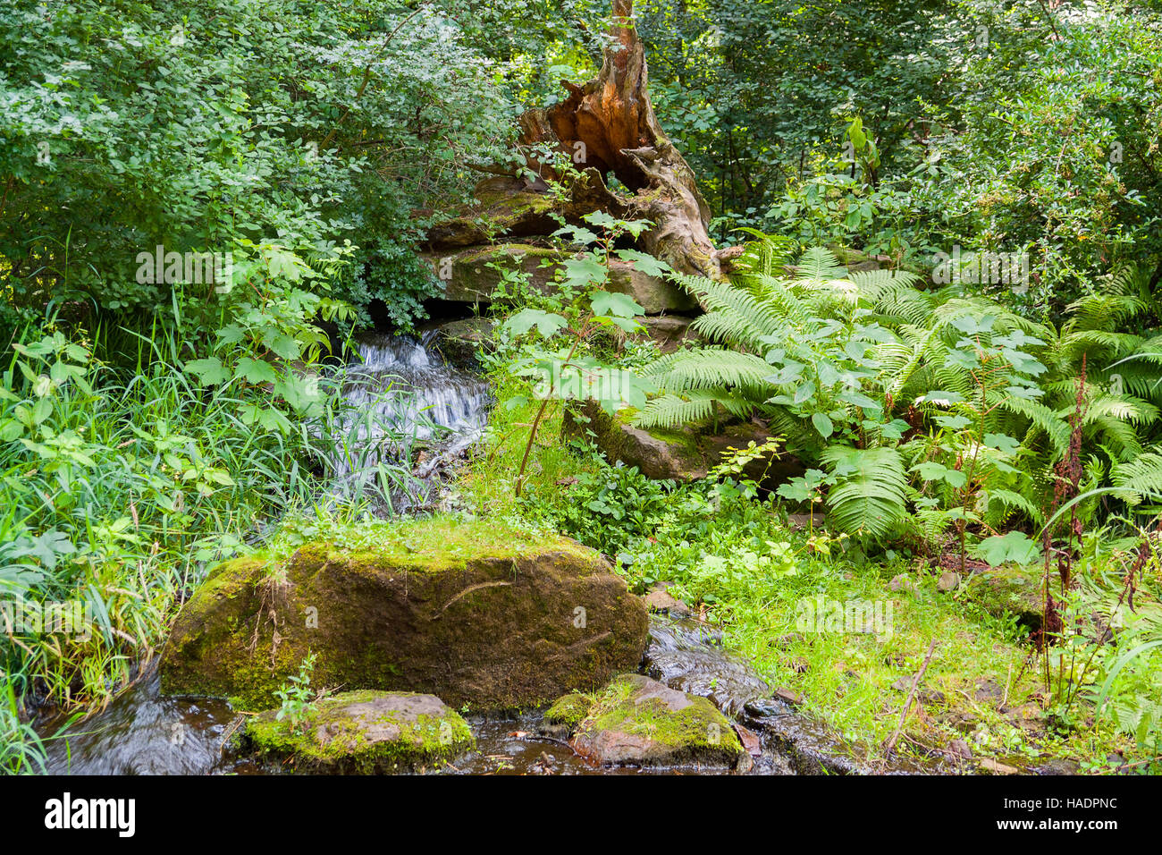 idyllic forest scenery including a fountain in green vegetation - Stock Image