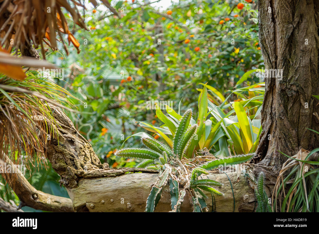 vivid scenery including lots of various jungle plants - Stock Image