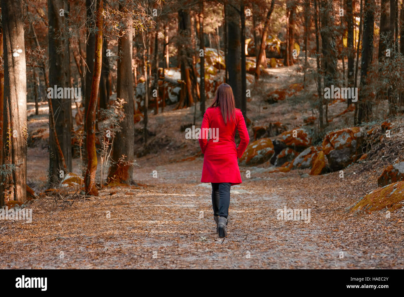 Young woman walking away alone on a forest path wearing a red overcoat - Stock Image
