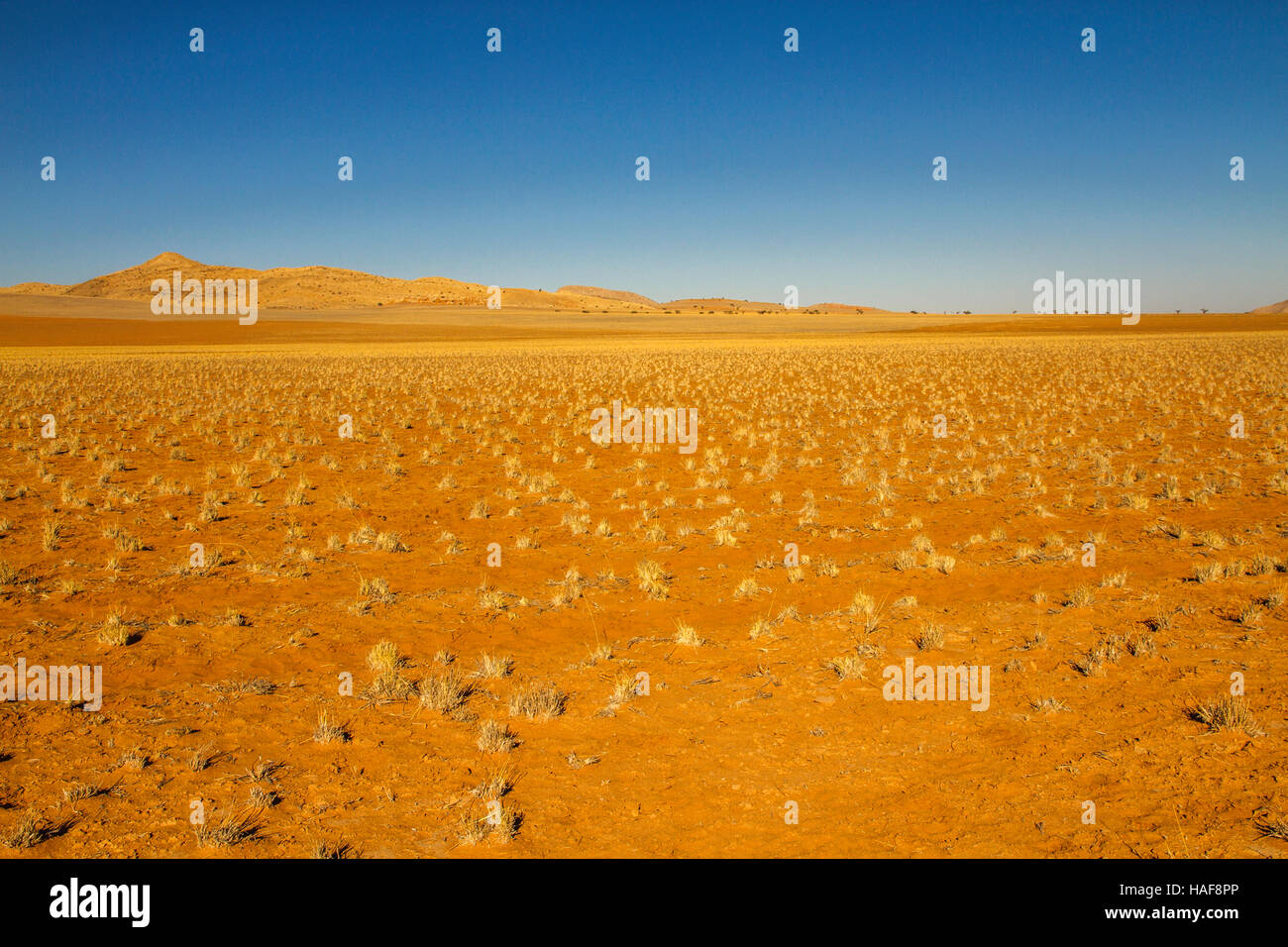 Occasional tufts of golden grass, bright orange sand, multi-coloured dunes and vivid blue skies make up the Namibian Stock Photo