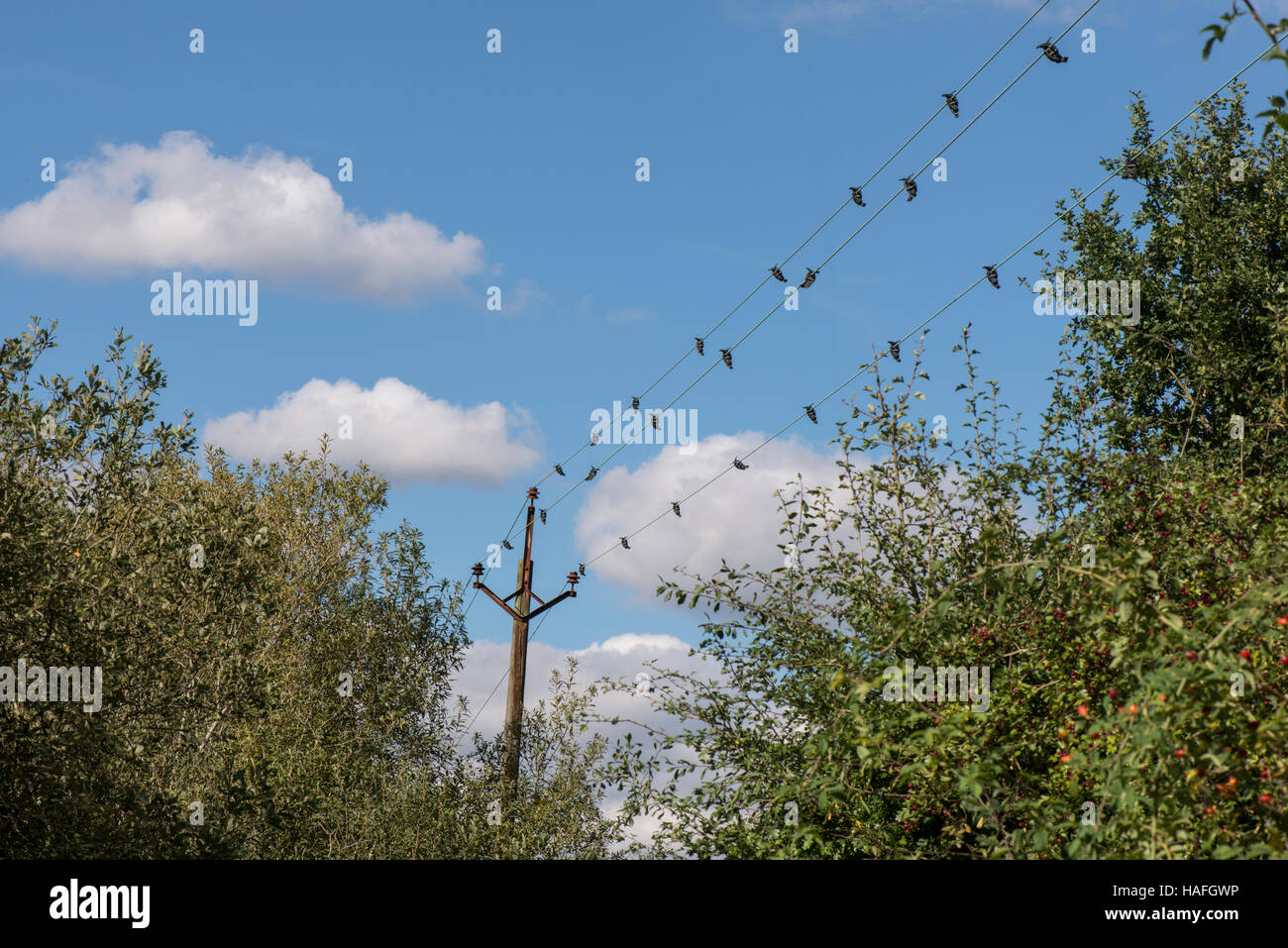 Swan Deflectors, devices to prevent birds from hitting electricity cables and avian collisions at Whisby Nature - Stock Image