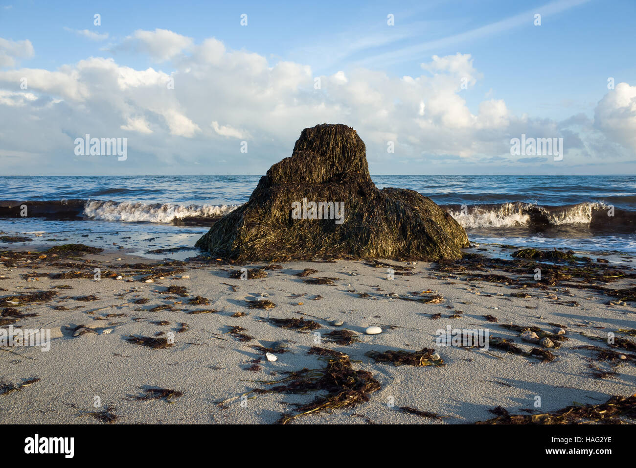 Seagrass At Beach In Denmark - Stock Image