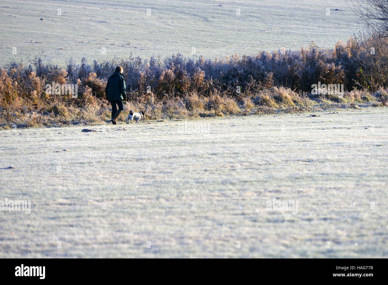Dog walker on frosty morning in Sussex - Stock Image