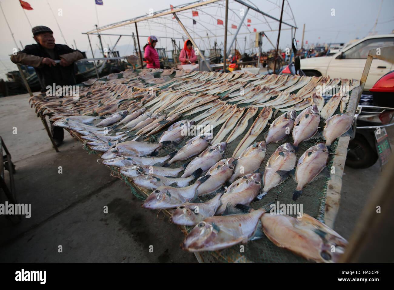 Qingdao, China's Shandong Province. 30th Nov, 2016. A fisherman airs fish at Gangdong Port in Qingdao City, - Stock Image
