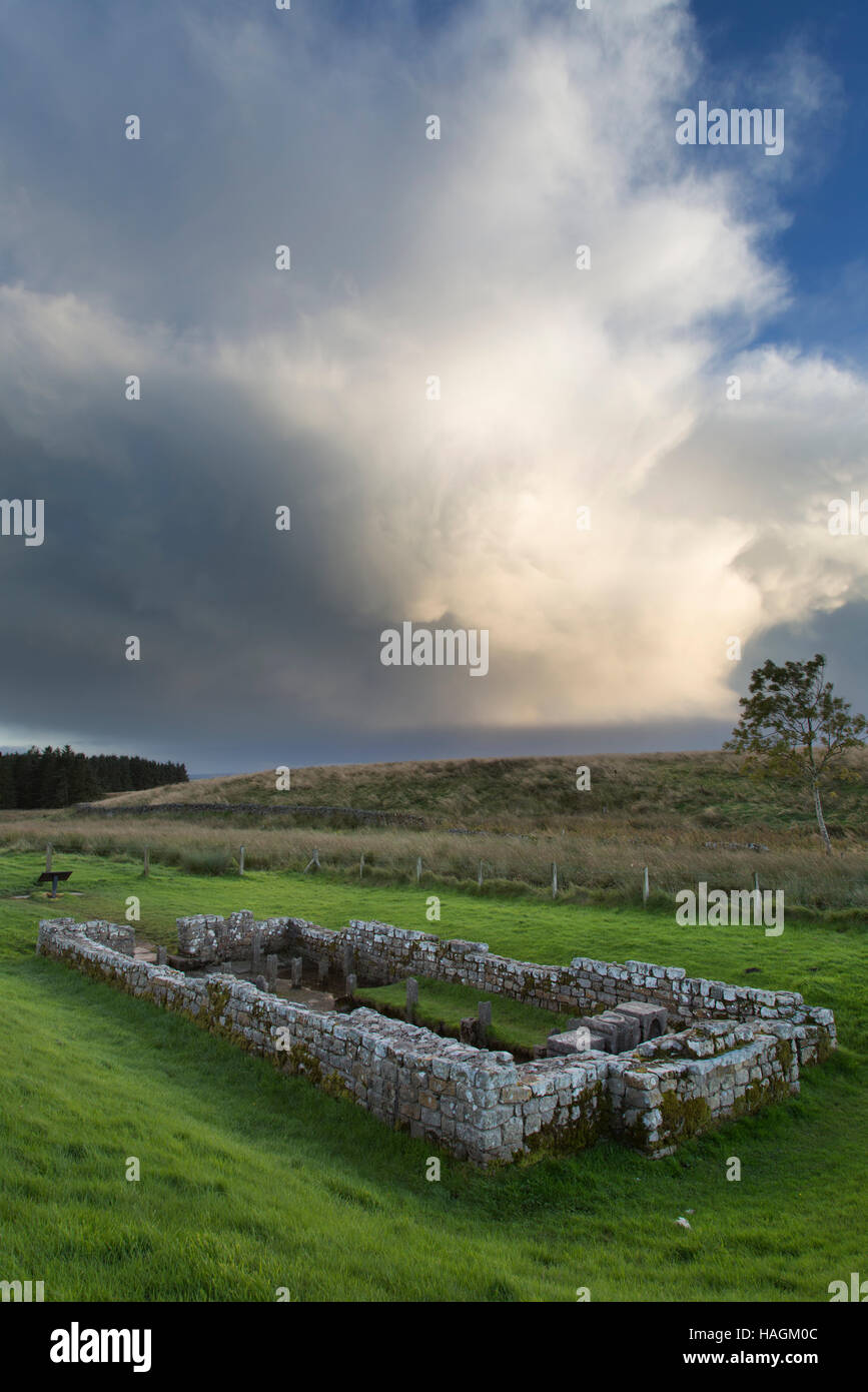 Mithraic Temple at Carrawburgh, Hadrian's Wall, Northumberland - Stock Image