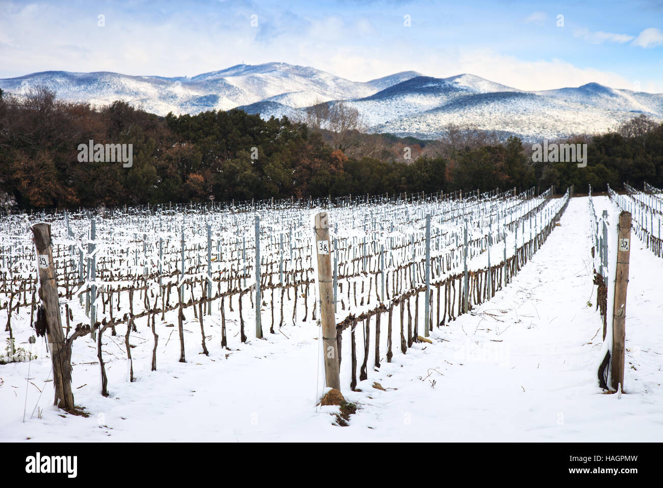 Vineyards rows covered by snow in winter. Chianti countryside, Florence, Tuscany region, Italy - Stock Image