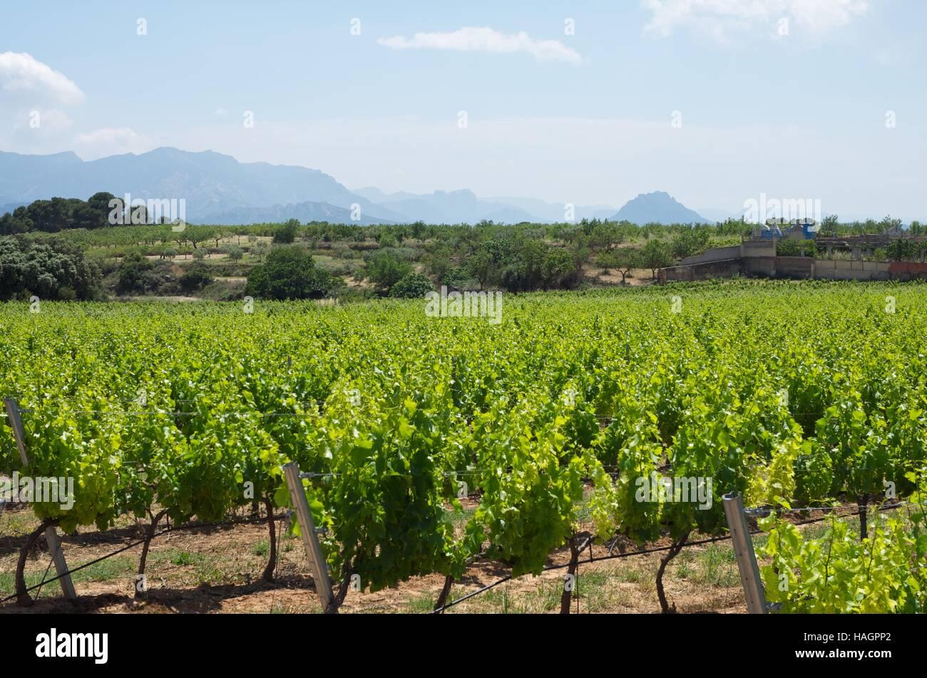 Vineyards near Horta de Sant Joan, and Els Ports Natural Park on the horizon, Tarragona, Spain - Stock Image