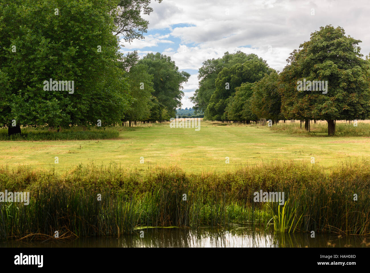 Alley of trees in the English Countryside on a summer's day walk - Stock Image