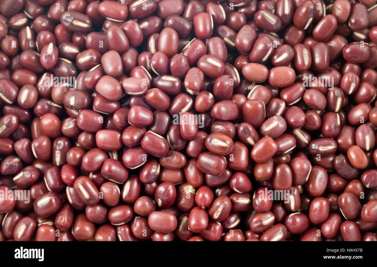 The adzuki bean, Vigna angularis, popular in Japanese cooking is an annual vine widely grown throughout East Asia - Stock Image