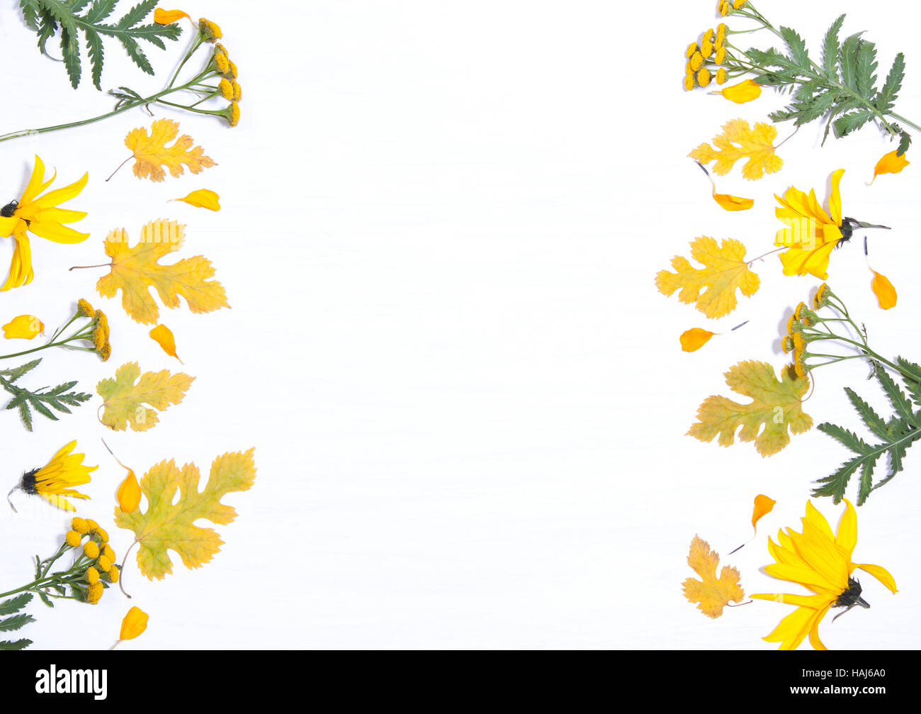 Frame On The Background Of Yellow Flowers And Leavesncept Stock