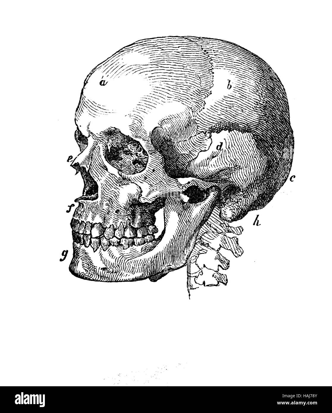 Skull Cut Out Stock Images & Pictures - Alamy