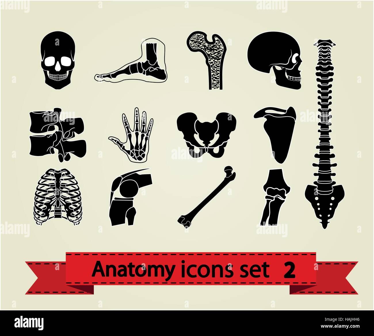 Human anatomy icons parts. Vector illustration eps 8. - Stock Image