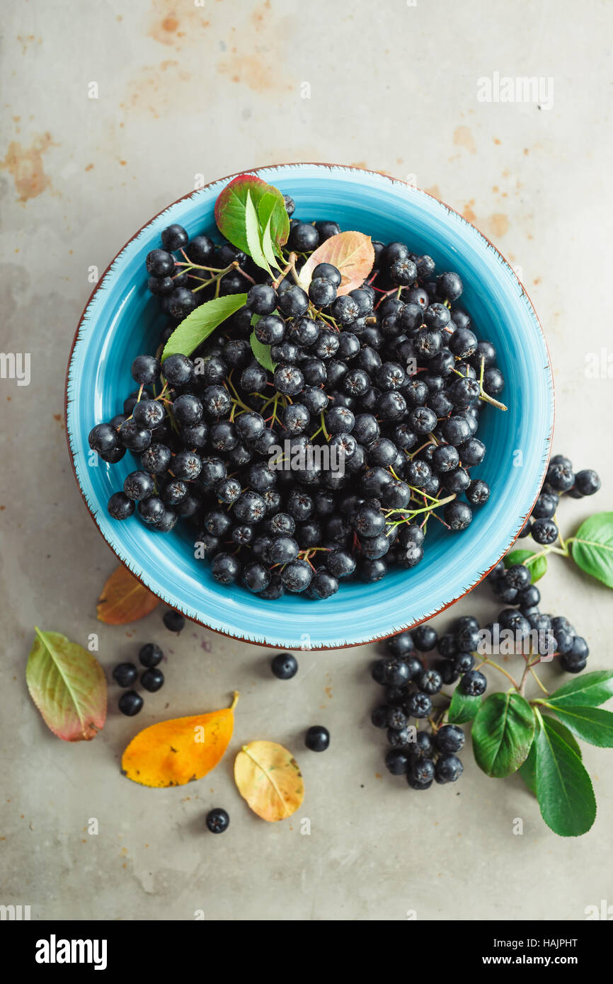 Aronia, commonly known as the chokeberry, with leaves - Stock Image