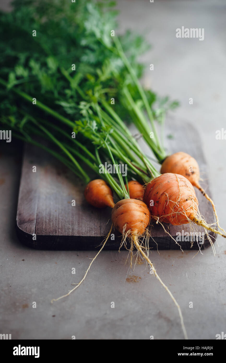 Bunch of small, round carrots (Parisian Heirloom Carrots). A bunch of carrots and leafy tops on a wooden board - Stock Image