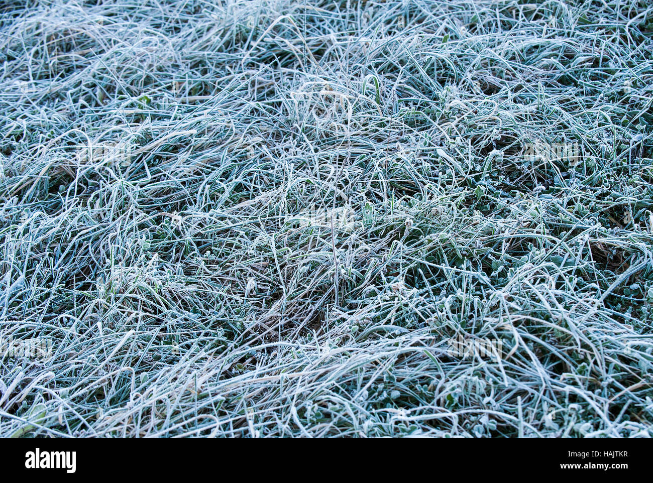 Morning ice frost on the ground - Stock Image