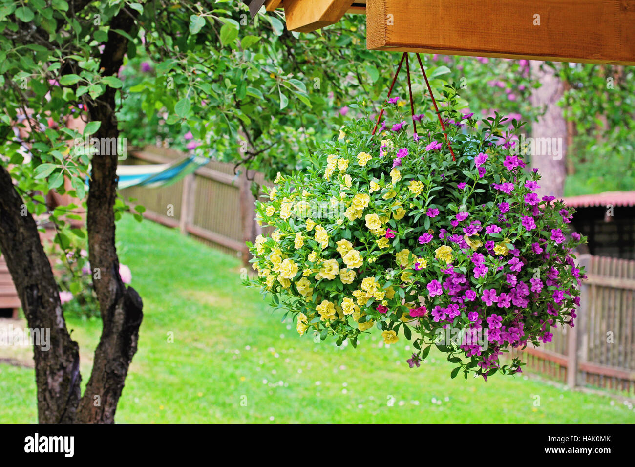 flower pot with colorful petunia hanging in backyard - Stock Image