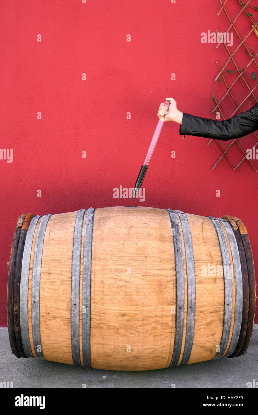 Winemaker getting sample of red wine from barrel - Stock Image