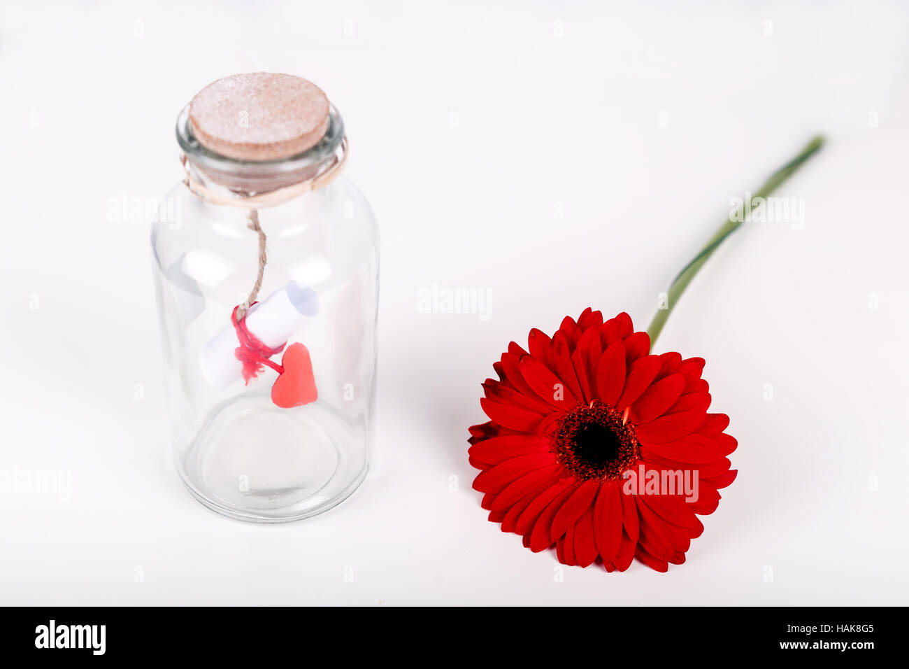Love message in a bottle. Roll of white paper with red thread and red gerbera flower on a white background. Saint - Stock Image
