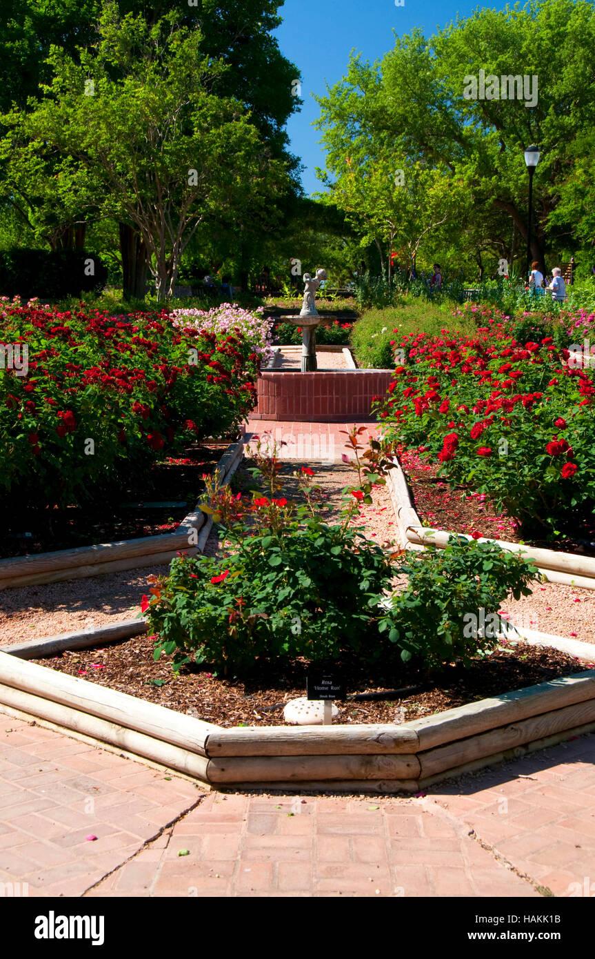 Rose Garden San Antonio Botanical Garden San Antonio Texas Stock