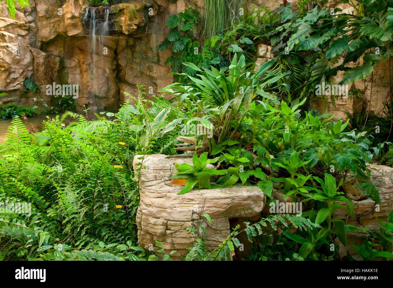 Fern Grotto, San Antonio Botanical Garden, San Antonio, Texas