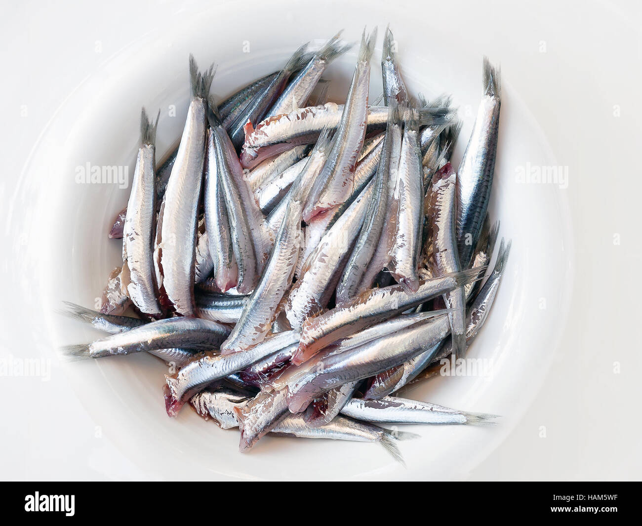 Anchovies headless, cleaned, prepared and ready in the pot, before cooking. - Stock Image