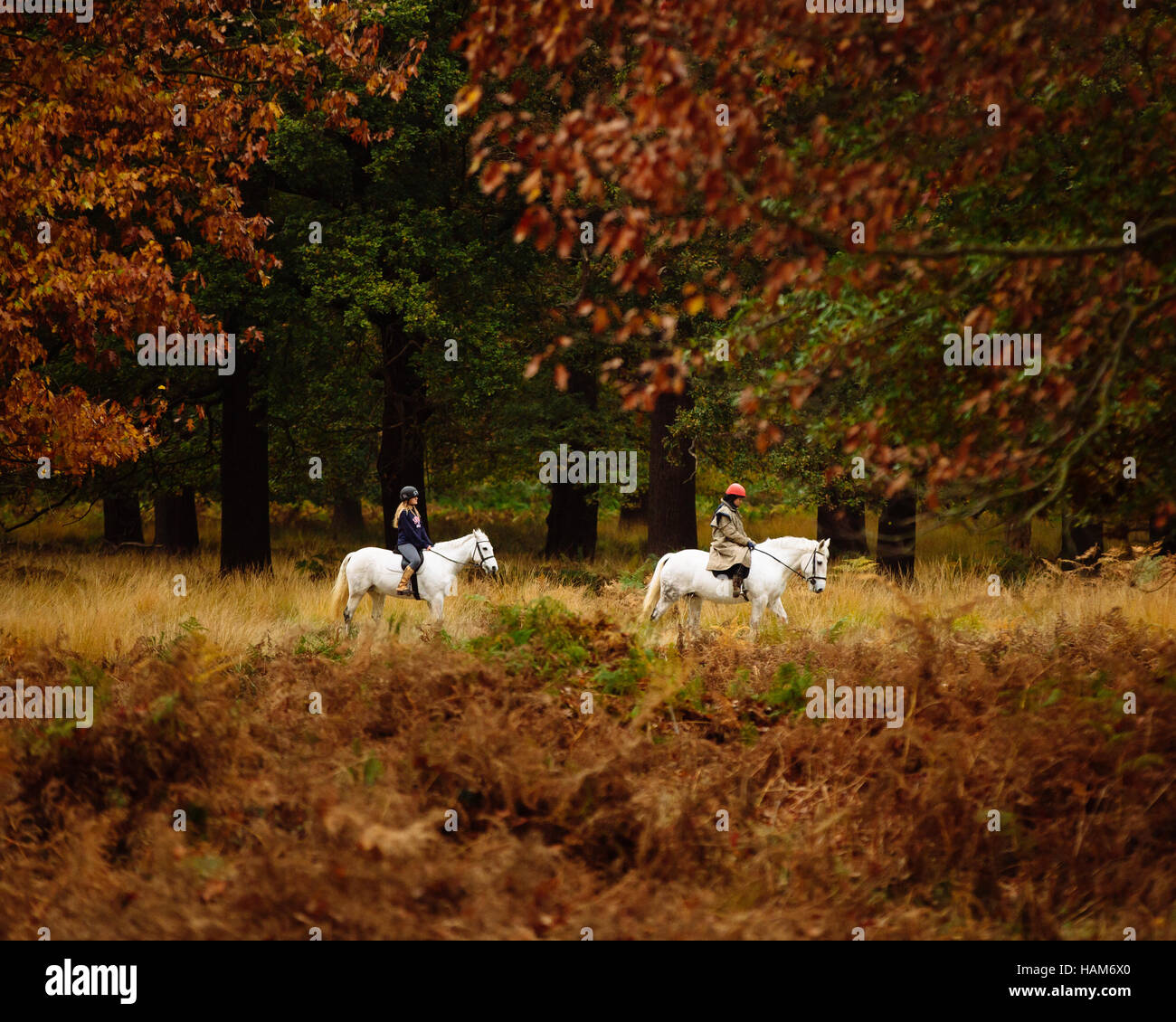 Two horse riders canter through Richmond Park in the autumn - Stock Image
