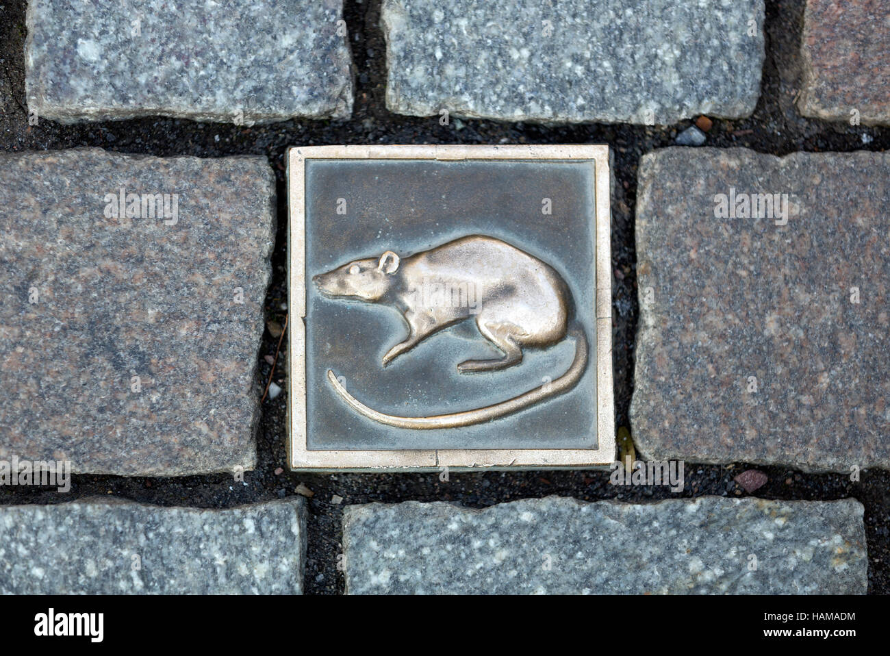 Paving tile with rat, rat catcher route, marking old city tour, historic centre, Hameln, Lower Saxony, Germany - Stock Image