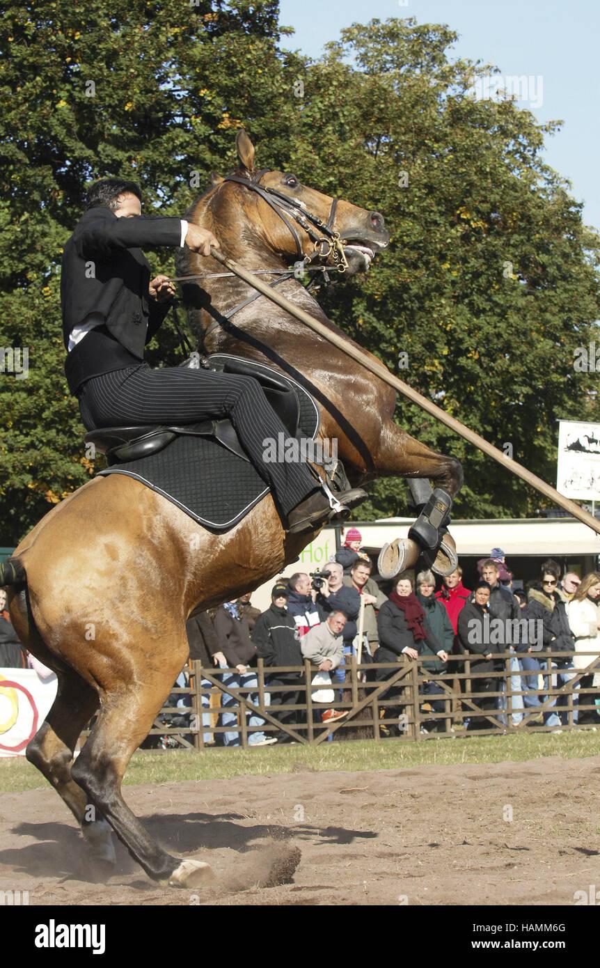 Lusitano Horse Portugal - Stock Image