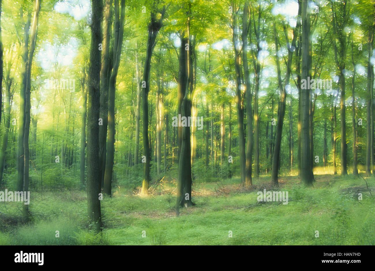 Deciduous Forest / Laubwald - Stock Image